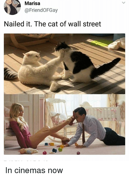 Memes, 🤖, and Cat: Marisa  @FriendOFGay  Nailed it. The cat of wall street In cinemas now