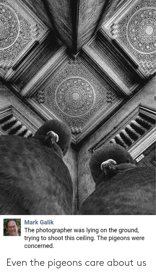pigeons: Mark Galik  The photographer was lying on the ground,  trying to shoot this ceiling. The pigeons were  concerned Even the pigeons care about us