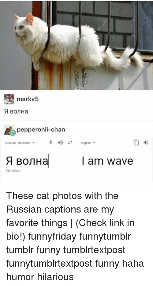 Chanli: markv5  pepperonii-chan  Russian detected  English  l am wave  YA volna These cat photos with the Russian captions are my favorite things | (Check link in bio!) funnyfriday funnytumblr tumblr funny tumblrtextpost funnytumblrtextpost funny haha humor hilarious
