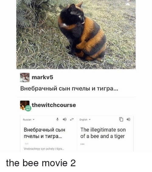 the bee movie: markv5  thewitchcourse  English  Russian  BHe6pay  Hbi cblH The illegitimate son  of a bee and a tiger  tsと  Vnebrachnyy syn pchely i tigra the bee movie 2