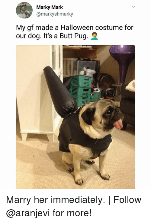 Butt, Halloween, and Memes: Marky Mark  @markyshmarky  My gf made a Halloween costume for  our dog. It's a Butt Pug. Marry her immediately. | Follow @aranjevi for more!