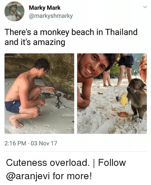 Memes, Beach, and Monkey: Marky Mark  @markyshmarky  There's a monkey beach in Thailand  and it's amazing  2:16 PM 03 Nov 17 Cuteness overload. | Follow @aranjevi for more!