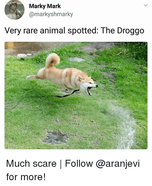 Memes, Scare, and Animal: Marky Mark  @markyshmarky  Very rare animal spotted: The Droggo Much scare | Follow @aranjevi for more!