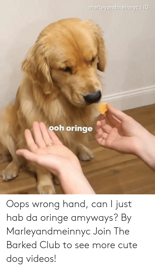 dog videos: marleyandmeinnyc | IG  ooh oringe Oops wrong hand, can I just hab da oringe amyways? By Marleyandmeinnyc  Join The Barked Club to see more cute dog videos!