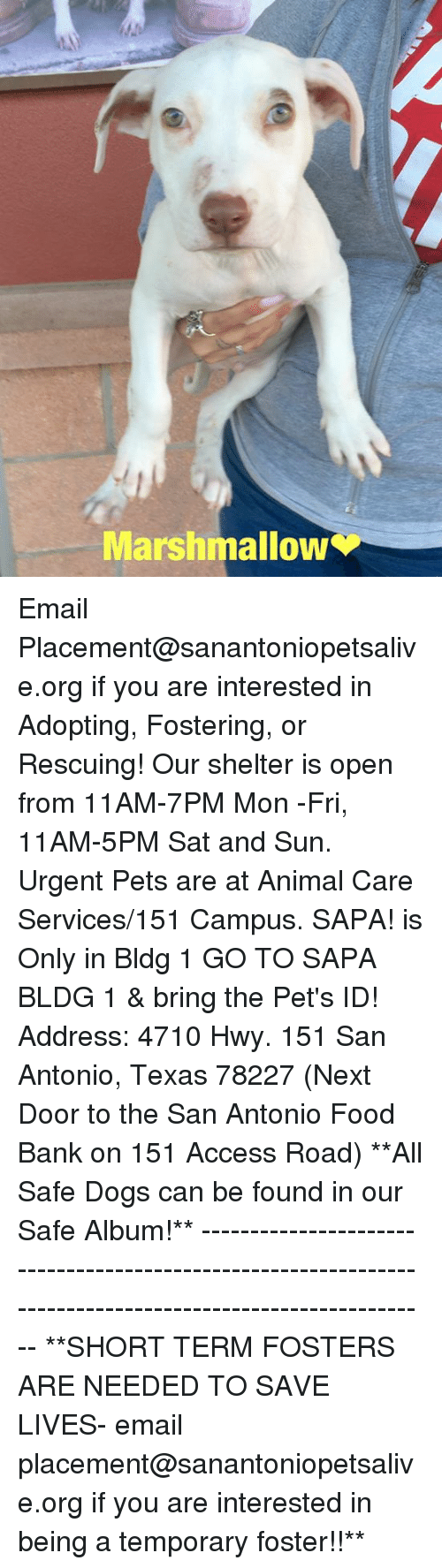 Dogs, Food, and Memes: Marshmallow Email Placement@sanantoniopetsalive.org if you are interested in Adopting, Fostering, or Rescuing!  Our shelter is open from 11AM-7PM Mon -Fri, 11AM-5PM Sat and Sun.  Urgent Pets are at Animal Care Services/151 Campus. SAPA! is Only in Bldg 1 GO TO SAPA BLDG 1 & bring the Pet's ID! Address: 4710 Hwy. 151 San Antonio, Texas 78227 (Next Door to the San Antonio Food Bank on 151 Access Road)  **All Safe Dogs can be found in our Safe Album!** ---------------------------------------------------------------------------------------------------------- **SHORT TERM FOSTERS ARE NEEDED TO SAVE LIVES- email placement@sanantoniopetsalive.org if you are interested in being a temporary foster!!**