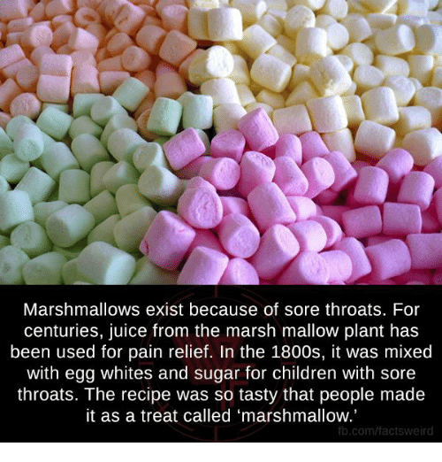 """So Tasty: Marshmallows exist because of sore throats. For  centuries, juice from the marsh mallow plant has  been used for pain relief. In the 1800s, it was mixed  with egg whites and sugar for children with sore  throats. The recipe was so tasty that people made  it as a treat called """"marshmallow.  fb.com/factsweird"""