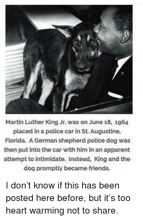 Police Car: Martin Luther King Jr. was on June 18, 1964  placed in a police car in St. Augustine,  Florida. A German shepherd police dog was  then put into the car with him in an apparent  attempt to intimidate. Instead, King and the  dog promptly became friends. I don't know if this has been posted here before, but it's too heart warming not to share.