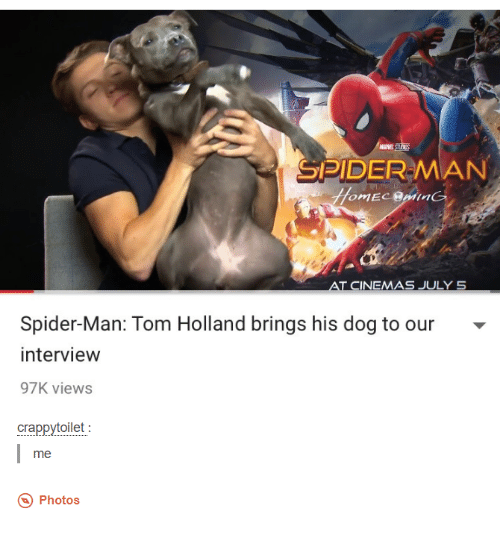 Spider, SpiderMan, and Toms: MARVE  SPIDER MAN  AT CINEMAS JULY 5  Spider-Man: Tom Holland brings his dog to our  interview  97K views  crappytoilet  me  Photos