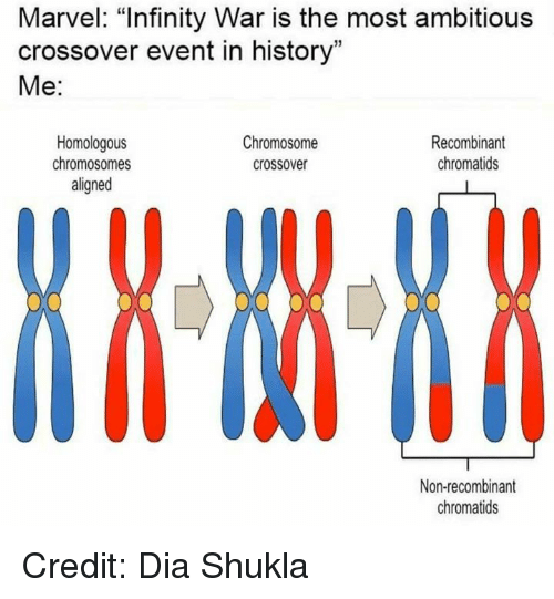 """Memes, History, and Infinity: Marvel: """"Infinity War is the most ambitious  crossover event in history""""  Me:  Homologous  chromosomes  aligned  Chromosome  crossover  Recombinant  chromatids  Non-recombinant  chromatids Credit: Dia Shukla"""
