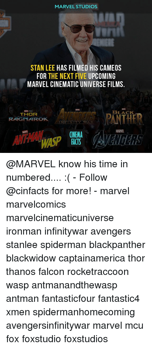marvel cinematic universe: MARVEL STUDIOS  STAN LEE HAS FILMED HIS CAMEOS  FOR THE NEXT FIVE UPCOMING  MARVEL CINEMATIC UNIVERSE FILMS.  AVENDERS PANTHE  ASP  LACK  RAGNAROK  MARVEL  CINEMA  FACTS  THE @MARVEL know his time in numbered.... :( - Follow @cinfacts for more! - marvel marvelcomics marvelcinematicuniverse ironman infinitywar avengers stanlee spiderman blackpanther blackwidow captainamerica thor thanos falcon rocketraccoon wasp antmanandthewasp antman fantasticfour fantastic4 xmen spidermanhomecoming avengersinfinitywar marvel mcu fox foxstudio foxstudios