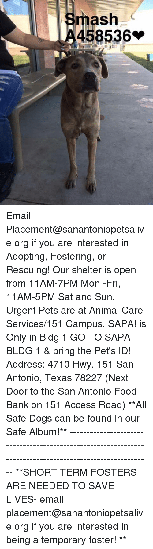Dogs, Food, and Memes: mash  458536 Email Placement@sanantoniopetsalive.org if you are interested in Adopting, Fostering, or Rescuing!  Our shelter is open from 11AM-7PM Mon -Fri, 11AM-5PM Sat and Sun.  Urgent Pets are at Animal Care Services/151 Campus. SAPA! is Only in Bldg 1 GO TO SAPA BLDG 1 & bring the Pet's ID! Address: 4710 Hwy. 151 San Antonio, Texas 78227 (Next Door to the San Antonio Food Bank on 151 Access Road)  **All Safe Dogs can be found in our Safe Album!** ---------------------------------------------------------------------------------------------------------- **SHORT TERM FOSTERS ARE NEEDED TO SAVE LIVES- email placement@sanantoniopetsalive.org if you are interested in being a temporary foster!!**