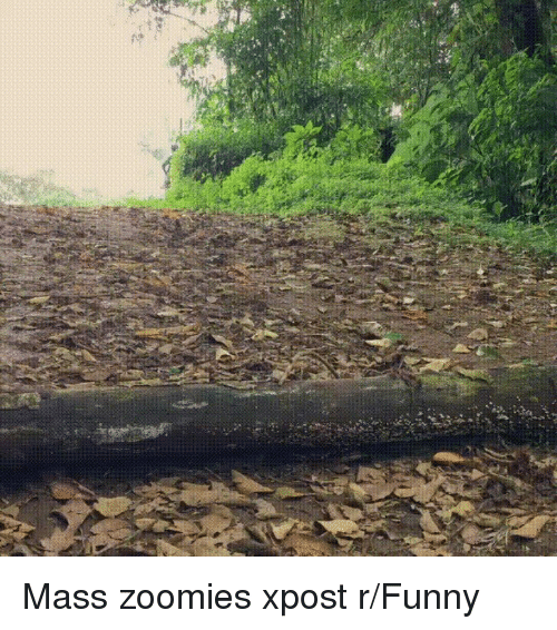 Funny, Zoomies, and Mass: Mass zoomies xpost r/Funny