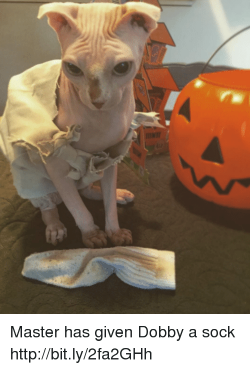 Master Has Given Dobby A Sock: Master has given Dobby a sock  http://bit.ly/2fa2GHh