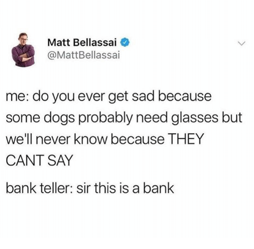 Need Glasses: Matt Bellassai  @MattBellassai  me: do you ever get sad because  some dogs probably need glasses but  well never know because THEY  CANT SAY  bank teller: sir this is a banlk