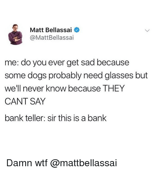 Need Glasses: Matt Bellassai  @MattBellassai  me: do you ever get sad because  some dogs probably need glasses but  we'll never know because THEY  CANT SAY  bank teller: sir this is a bank Damn wtf @mattbellassai