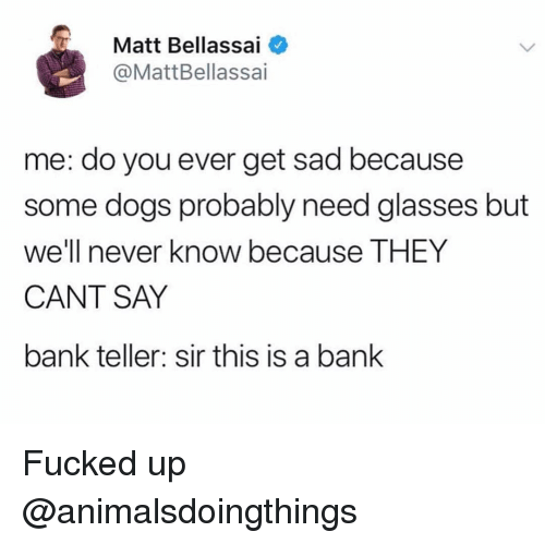 bank teller: Matt Bellassai  @MattBellassai  me: do you ever get sad because  some dogs probably need glasses but  we'll never know because THEY  CANT SAY  bank teller: sir this is a bank Fucked up @animalsdoingthings