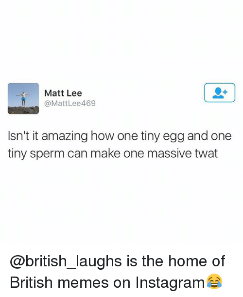 Instagram, Memes, and Home: Matt Lee  @MattLee469  Isn't it amazing how one tiny egg and one  tiny sperm can make one massive twat @british_laughs is the home of British memes on Instagram😂