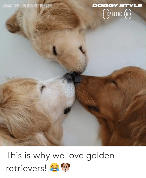 doggy style: @MATTEO.GOLDENRETRIEVER  DOGGY STYLE  EPISODE 28 This is why we love golden retrievers! 😂🐶