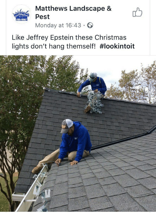 pest: Matthews Landscape &  MATTHEWS  Pest  286-0967  Monday at 16:43  Like Jeffrey Epstein these Christmas  lights don't hang themself!