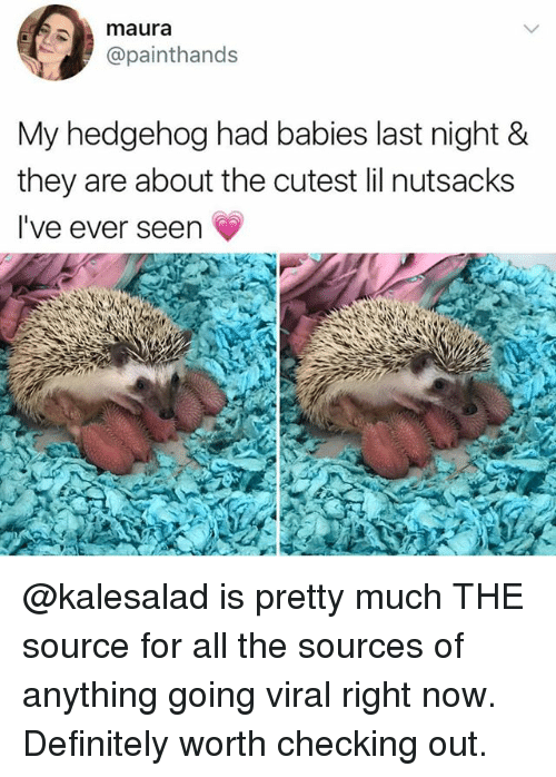 Definitely, Funny, and Hedgehog: maura  @painthands  My hedgehog had babies last night &  they are about the cutest lil nutsacks  I've ever seen @kalesalad is pretty much THE source for all the sources of anything going viral right now. Definitely worth checking out.