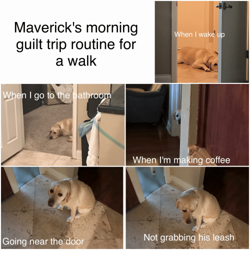 maverick s morning when i wake up guilt trip routine for a