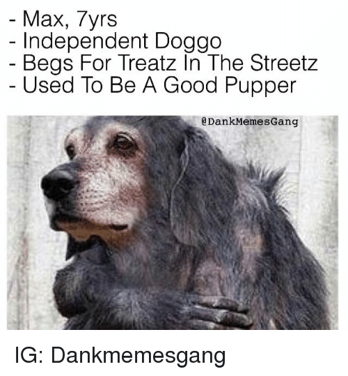 Meme Gang: Max, 7yrs  Independent Doggo  Begs For Treatz In The Streetz  Used To Be A Good Pupper  a Dank Memes Gang IG: Dankmemesgang