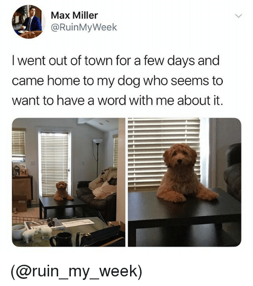 Home, Word, and Dank Memes: Max Miller  @RuinMyWeek  I went out of town for a few days and  came home to my dog who seems to  want to have a word with me about it. (@ruin_my_week)