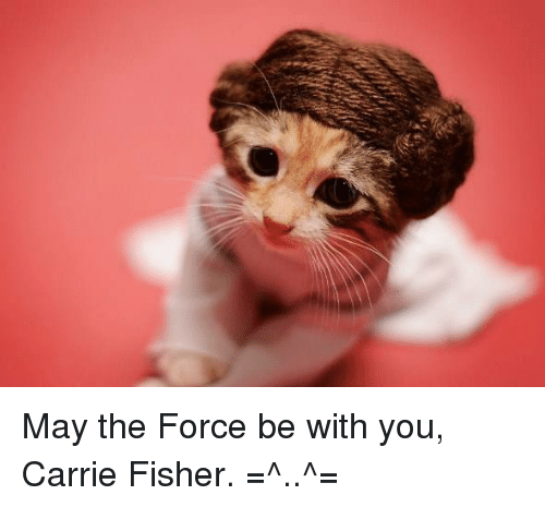 May The Fourth Be With You Wookie: Funny May The Force Be With You Memes Of 2017 On SIZZLE