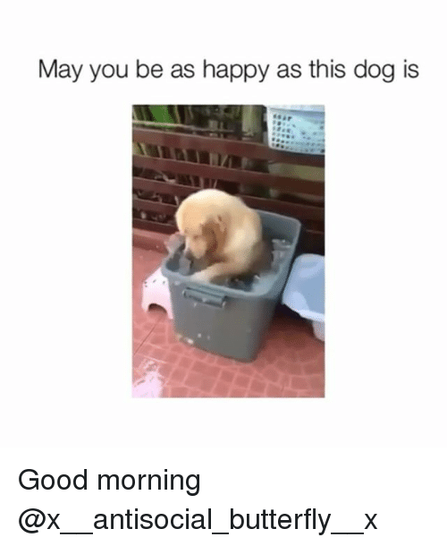 butterflys: May you be as happy as this dog is Good morning @x__antisocial_butterfly__x