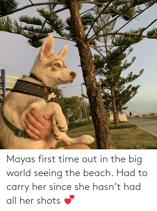 the beach: Mayas first time out in the big world seeing the beach. Had to carry her since she hasn't had all her shots 💕