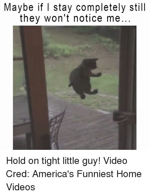 hold on tight: Maybe if I stay completely still  they won't notice me Hold on tight little guy!  Video Cred: America's Funniest Home Videos