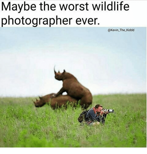Memes, The Worst, and 🤖: Maybe the worst wildlife  photographer ever.  @Kevin The Kiddd