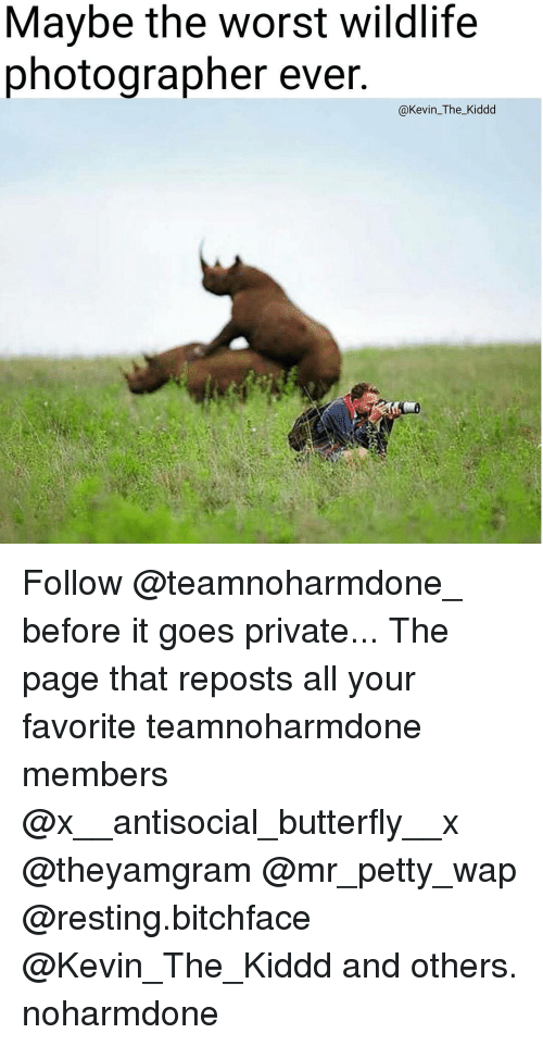 Memes, The Worst, and 🤖: Maybe the Worst Wildlife  photographer ever.  @Kevin The Kiddd Follow @teamnoharmdone_ before it goes private... The page that reposts all your favorite teamnoharmdone members @x__antisocial_butterfly__x @theyamgram @mr_petty_wap @resting.bitchface @Kevin_The_Kiddd and others. noharmdone