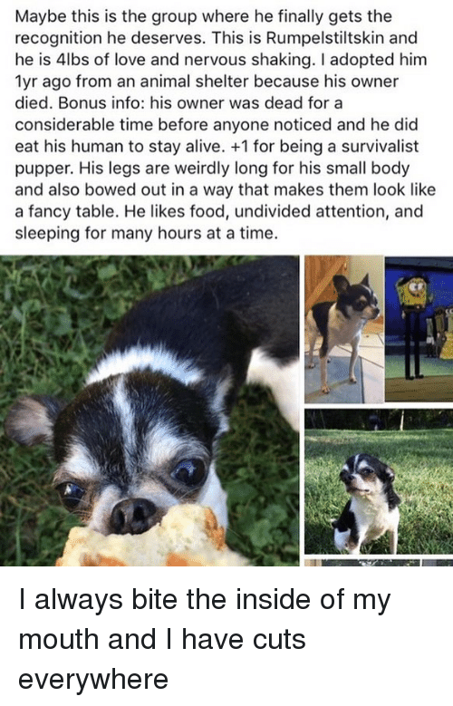 Alive, Food, and Love: Maybe this is the group where he finally gets the  recognition he deserves. This is Rumpelstiltskin and  he is 4lbs of love and nervous shaking. I adopted him  1yr ago from an animal shelter because his owner  died. Bonus info: his owner was dead for a  considerable time before anyone noticed and he did  eat his human to stay alive. +1 for being a survivalist  pupper. His legs are weirdly long for his small body  and also bowed out in a way that makes them look like  a fancy table. He likes food, undivided attention, and  sleeping for many hours at a time. I️ always bite the inside of my mouth and I️ have cuts everywhere