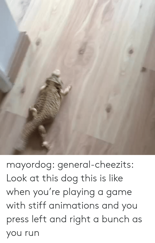 Look At This Dog: mayordog:  general-cheezits:  Look at this dog  this is like when you're playing a game with stiff animations and you press left and right a bunch as you run