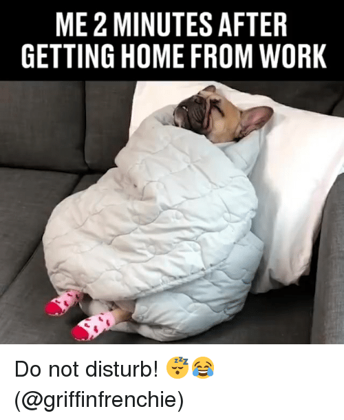 Memes, Work, and Home: ME 2 MINUTES AFTER  GETTING HOME FROM WORK Do not disturb! 😴😂 (@griffinfrenchie)