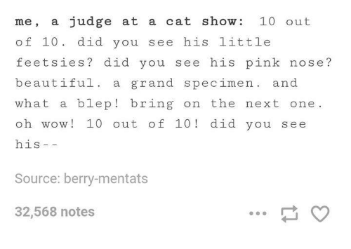 Mentats: me, a judge at a cat show 10 out  of 10 did you see his little  feet sies? did you see his pink nose?  beautiful a grand specimen  and  what a blep bring on the  next one  oh wow 10 out of 10 did you s ee  his  Source: berry-mentats  32,568 notes