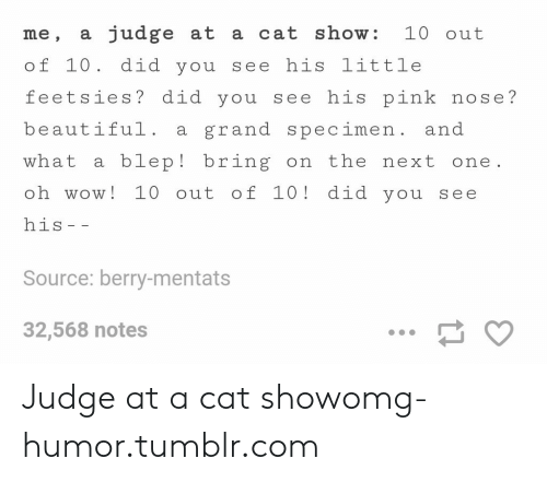 Beautiful, Omg, and Tumblr: me, a judge at a cat show: 10 out  of 10. did you see his little  feetsies? did you see his pink nose?  beautiful. a grand specimen. and  what a blep! bring on the next one  oh wow! 10 out of 10! did you see  his  Source: berry-mentats  32,568 notes Judge at a cat showomg-humor.tumblr.com