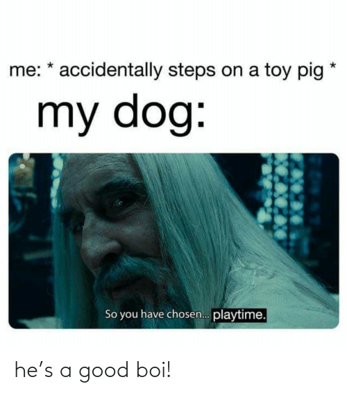 accidentally: me: * accidentally steps on a toy pig  my dog:  So you have chosen. playtime. he's a good boi!