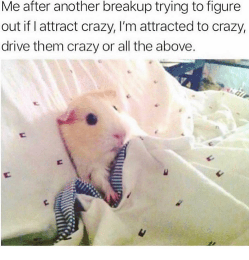 breakup: Me after another breakup trying to figure  out if I attract crazy, I'm attracted to crazy,  drive them crazy or all the above