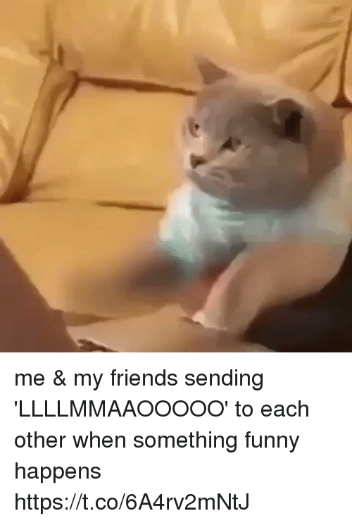 Friends, Funny, and Amp: me & my friends sending 'LLLLMMAAOOOOO' to each other when something funny happens https://t.co/6A4rv2mNtJ