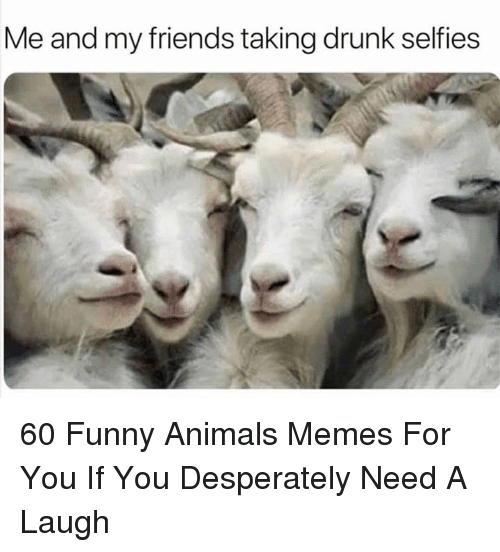 Animals Memes: Me and my friends taking drunk selfies 60 Funny Animals Memes For You If You Desperately Need A Laugh