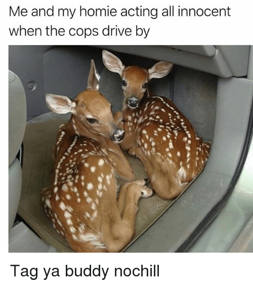 Drive By, Funny, and Homie: Me and my homie acting all innocent  when the cops drive by Tag ya buddy nochill