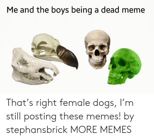 Dead Meme: Me and the boys being a dead meme That's right female dogs, I'm still posting these memes! by stephansbrick MORE MEMES