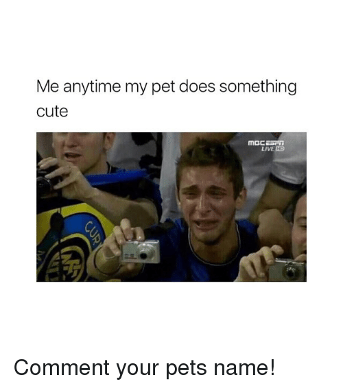 Cute, Pets, and Live: Me anytime my pet does something  cute  Moc  LIVE ND Comment your pets name!