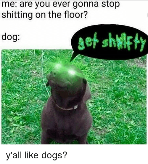 Dogs, Memes, and 🤖: me: are you ever gonna stop  shitting on the floor?  dog y'all like dogs?