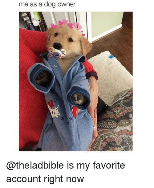 Funny, Dog, and Account: me as a dog owner @theladbible is my favorite account right now