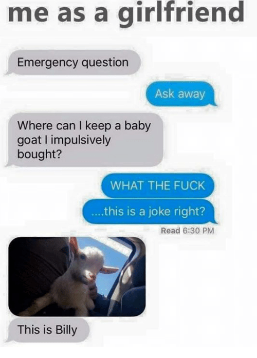 Baby Goats: me as a girlfriend  Emergency question  Ask away  Where can I keep a baby  goat impulsively  bought?  WHAT THE FUCK  this is a joke right?  Read 6:30 PM  This is Billy