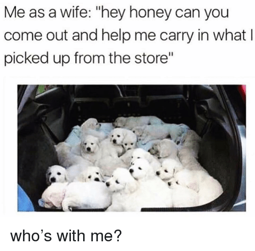 "Memes, Help, and Wife: Me as a wife: ""hey honey can you  come out and help me carry in what l  picked up from the store"" who's with me?"