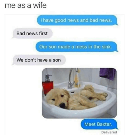 Me As A Wife: me as a wife  I have good news and bad news.  Bad news first  Our son made a mess in the sink  We don't have a son  Meet Baxter  Delivered